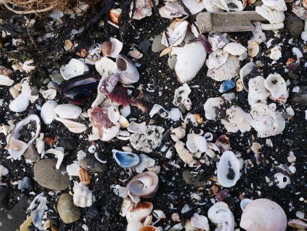 海岸にあるもの、生き物に注意すること