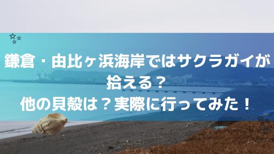 鎌倉・由比ガ浜海岸でサクラガイは拾える