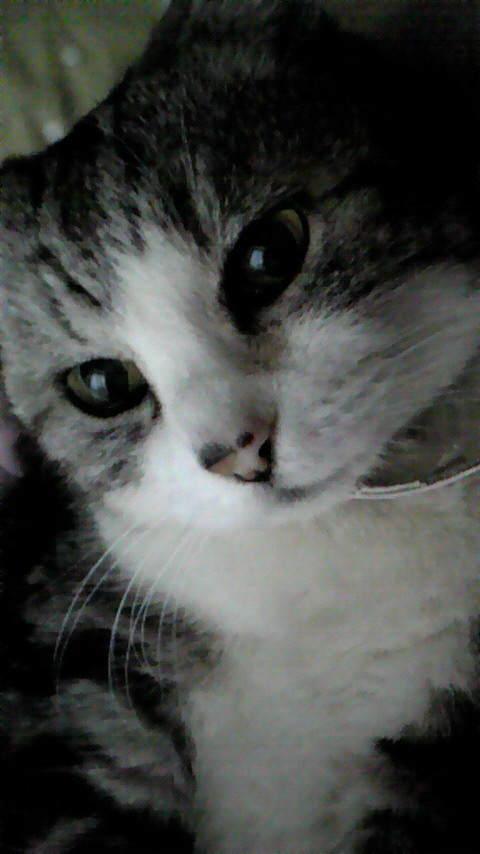 20年以上飼った家のネコが亡くなった話ペットロス