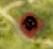 f:id:hexremonad:20200121223752p:plain