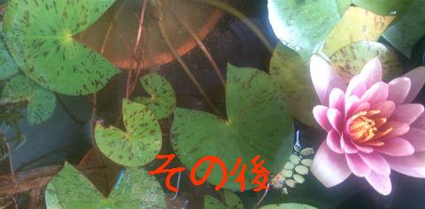 f:id:hi-zakky:20131117094906j:plain
