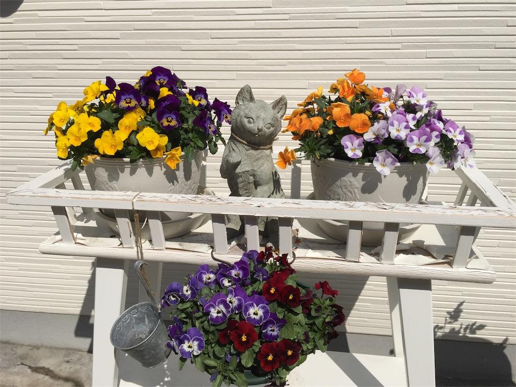 f:id:hidamari-pet-ceremony:20170403094916j:image