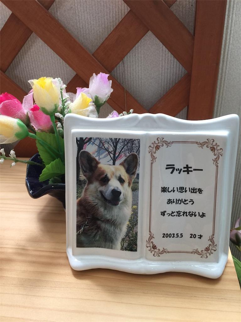 f:id:hidamari-pet-ceremony:20170529140314j:image