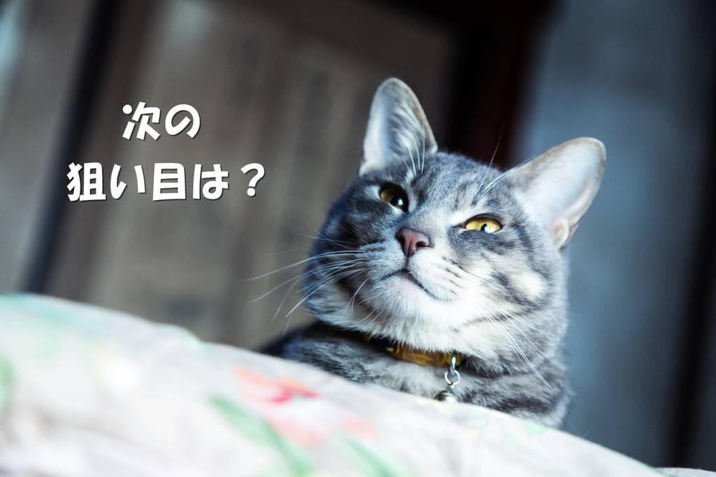 f:id:hidamaru:20190221185028j:plain