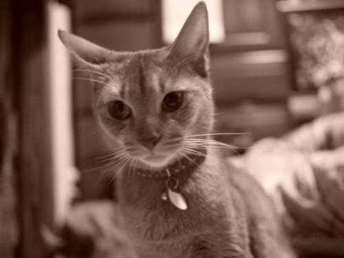 [猫][白黒][セピア]