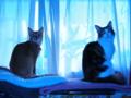 [猫]うちの猫「ツーショット」