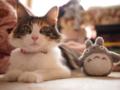 [猫]トトロと猫