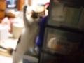 [猫]ガッツポーズ