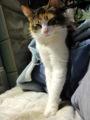 [猫]モデル立ち