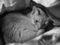 [猫][白黒]