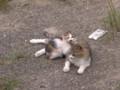 [猫]猫の親子