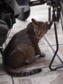 [猫]猫@新世界