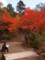 [紅葉][京都]
