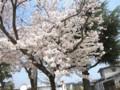 2018年4月1日-桜が満開です@近所の児童公園