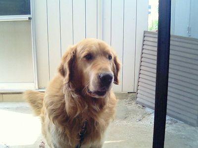 我が家のセラピー犬 ヴェル君