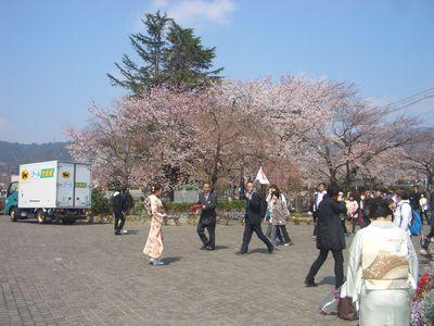 振り袖姿と桜