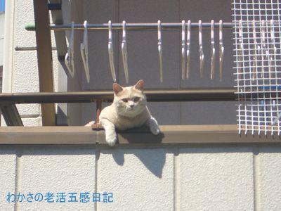 日向ぼっこをする猫