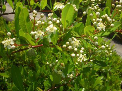 トゲがある垣根の花
