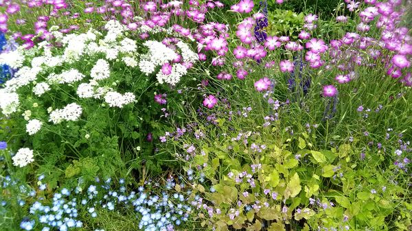 寄せ植え草花たちの写真集