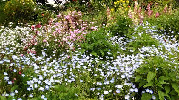 青紫と緑、ピンクの寄せ植え