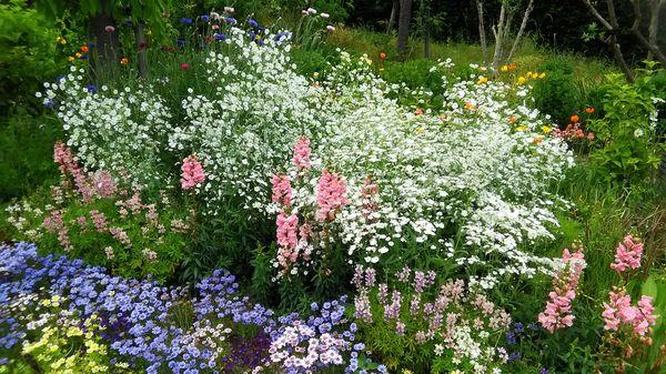 白とピンクが清楚な寄せ植え