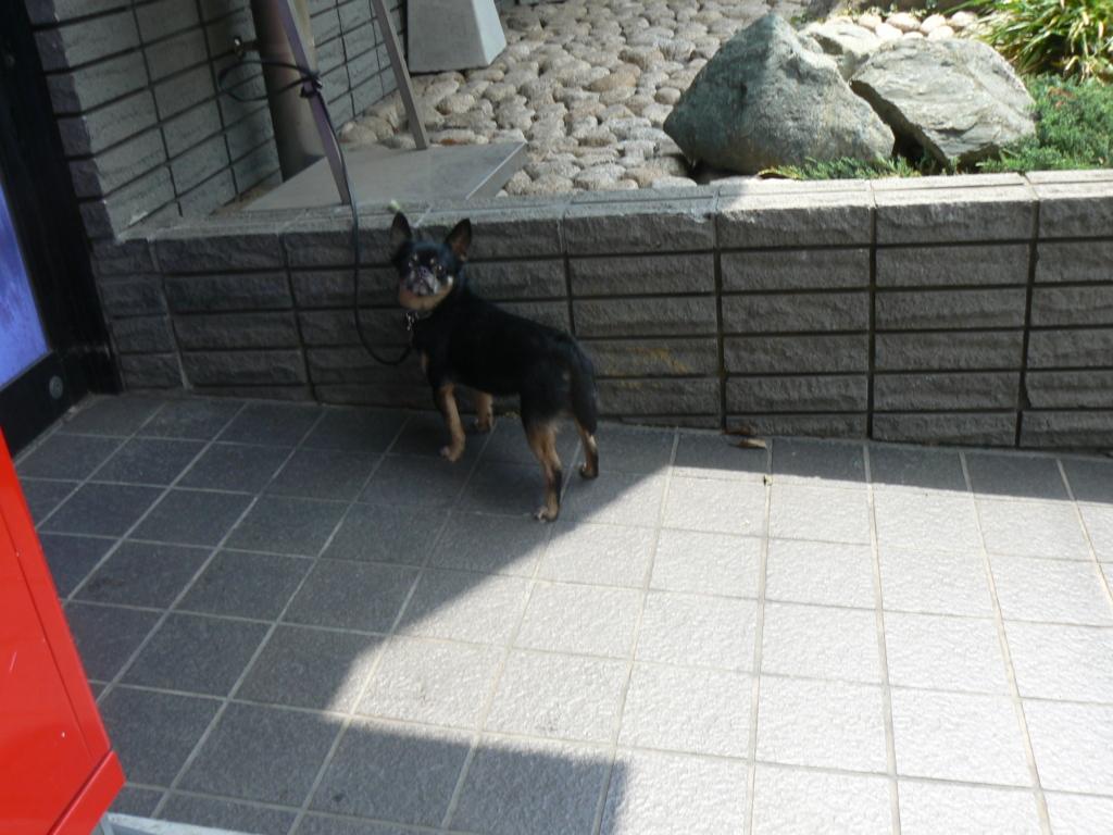 f:id:hideki-sansho:20171003193004j:plain
