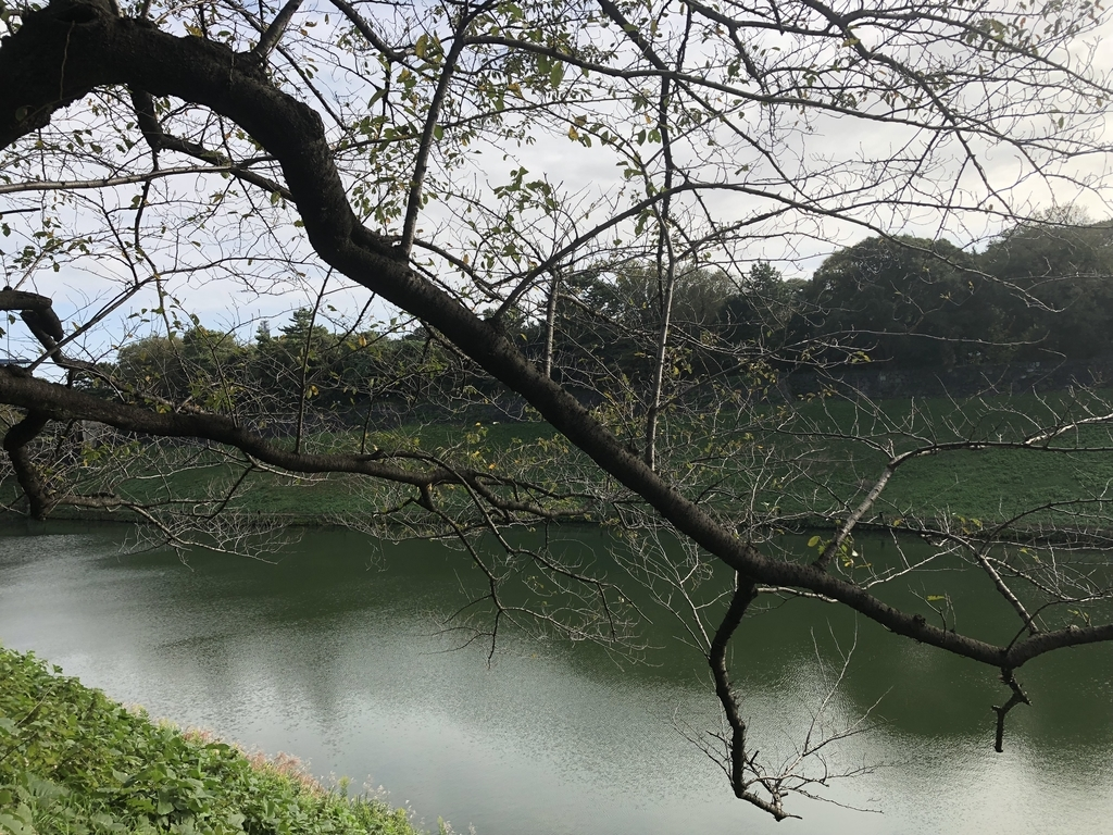 f:id:hideki-sansho:20181010140928j:plain