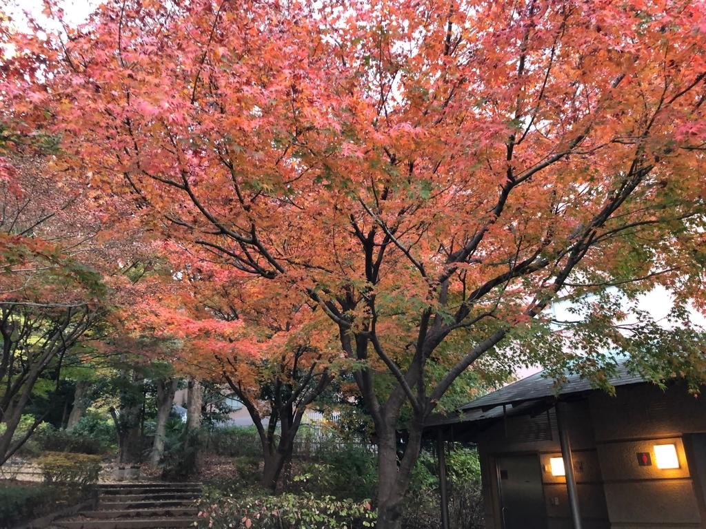f:id:hideki-sansho:20181209114953j:plain