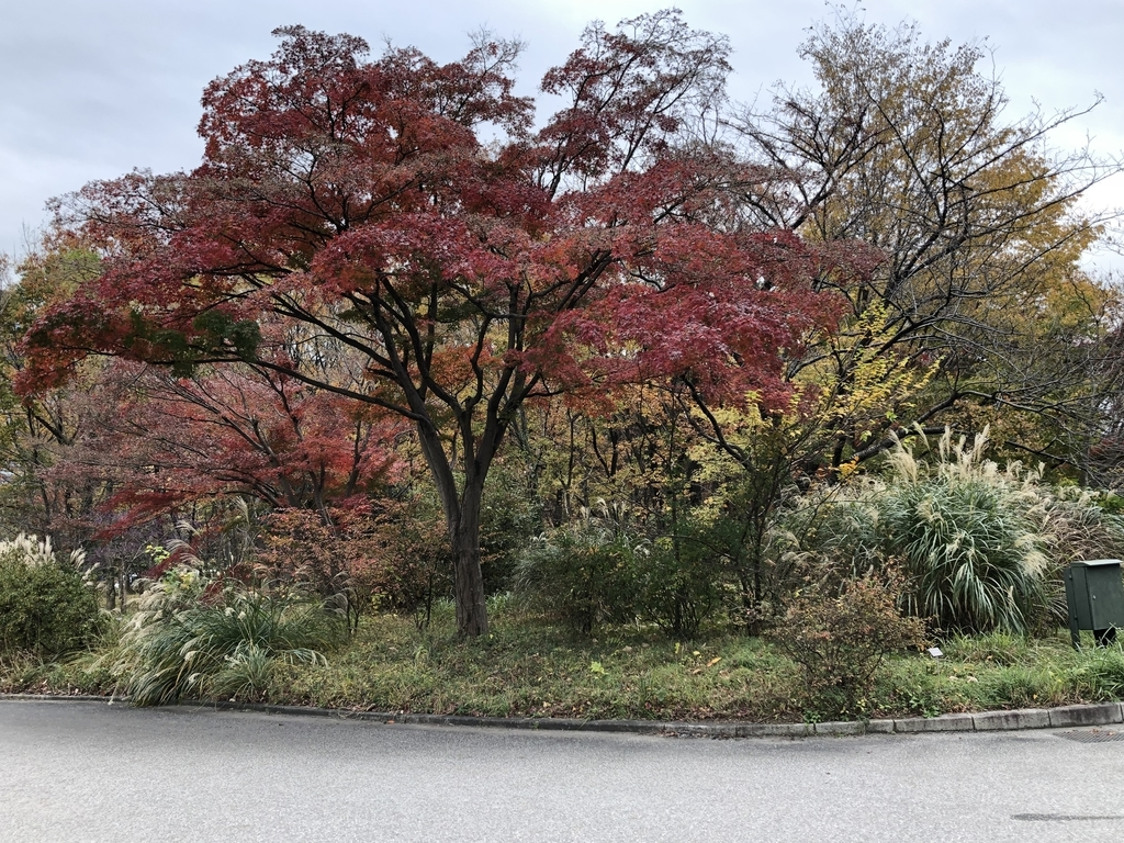 f:id:hideki-sansho:20181211162336j:plain