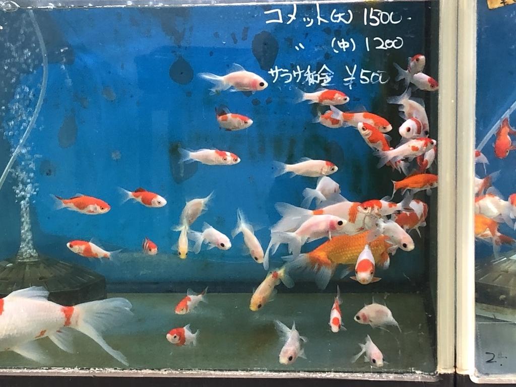 f:id:hideki-sansho:20181214200218j:plain