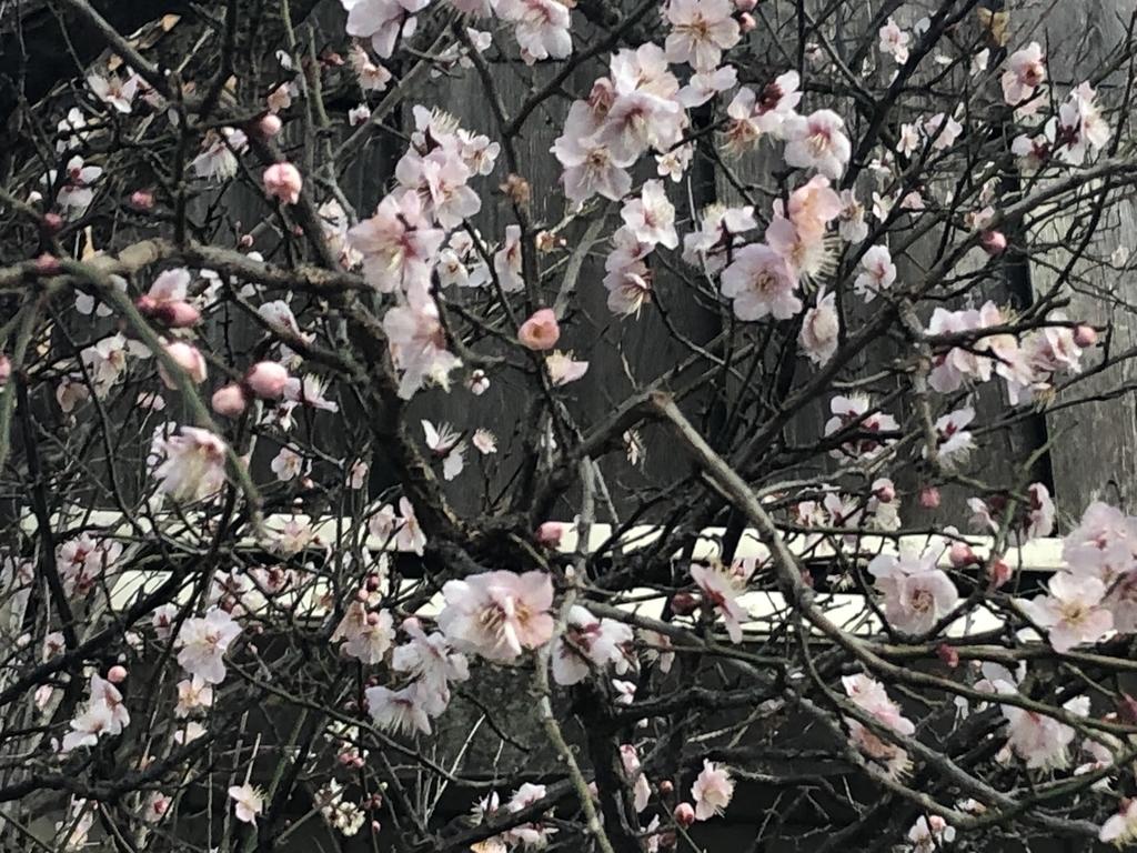 f:id:hideki-sansho:20190128184247j:plain