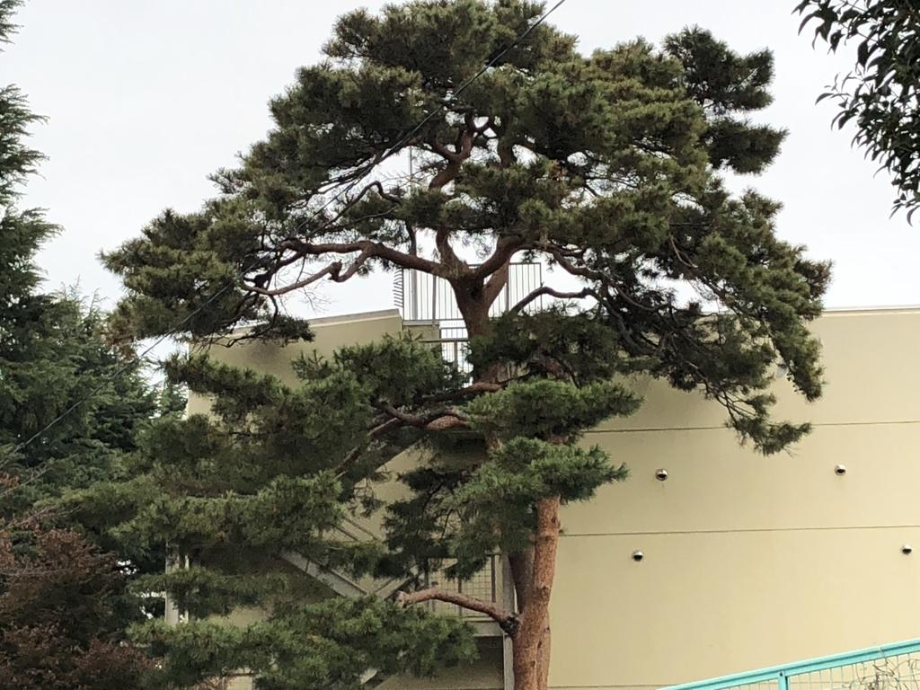 f:id:hideki-sansho:20190131160547j:plain