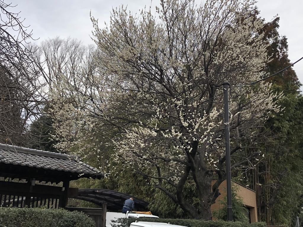 f:id:hideki-sansho:20190205204413j:plain