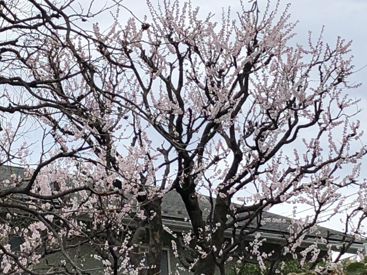 f:id:hideki-sansho:20190325172323j:plain