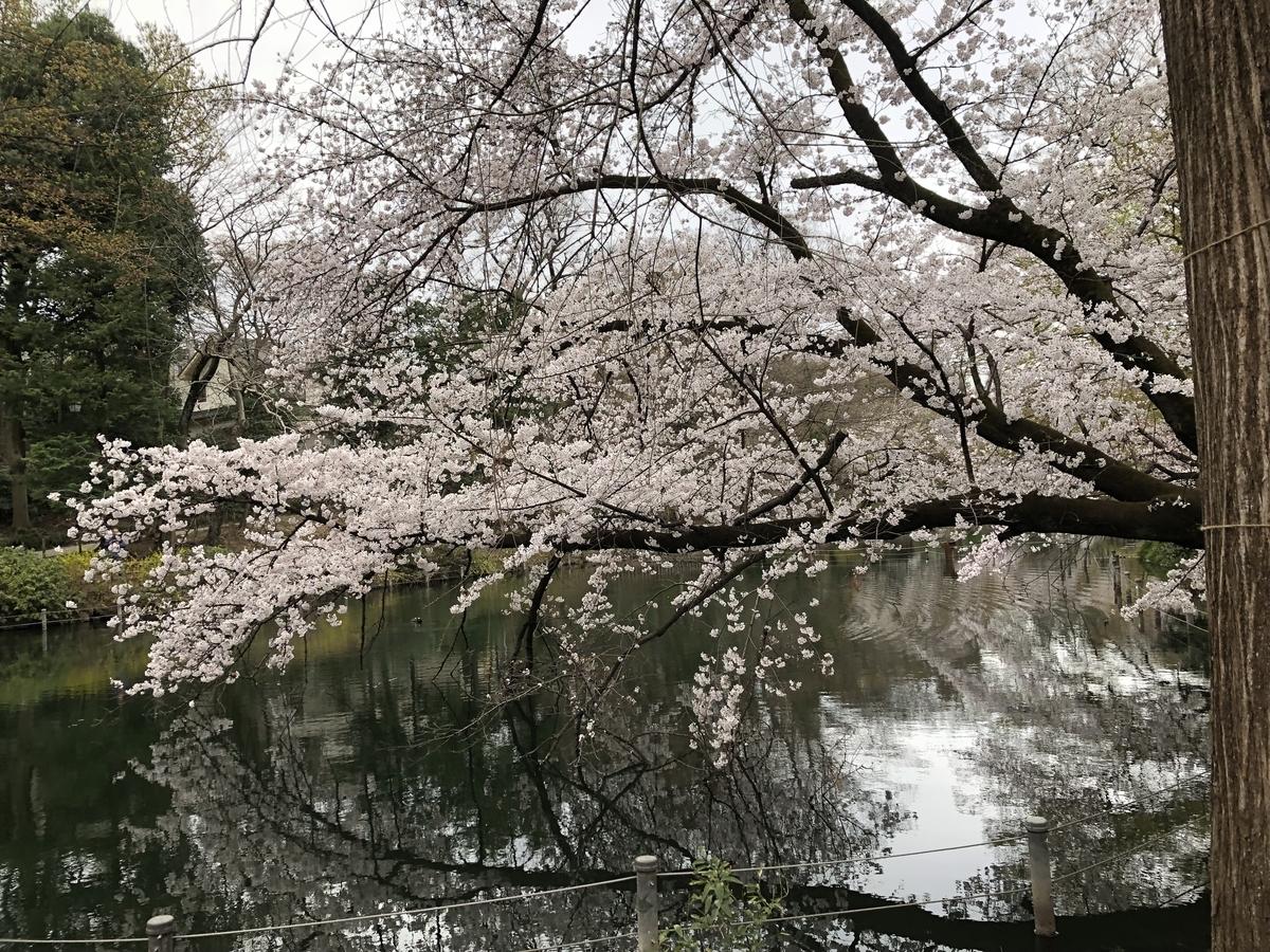 f:id:hideki-sansho:20190329153914j:plain