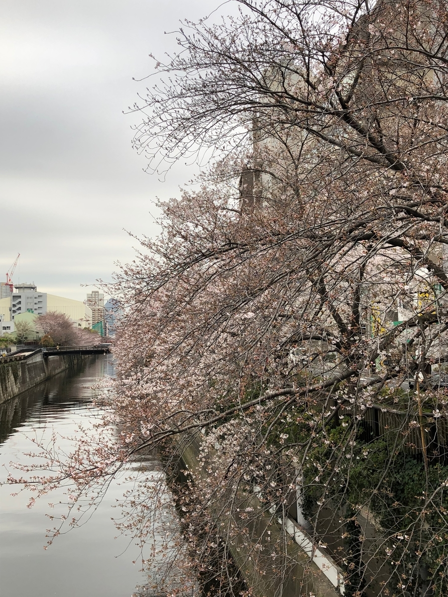 f:id:hideki-sansho:20190329155341j:plain