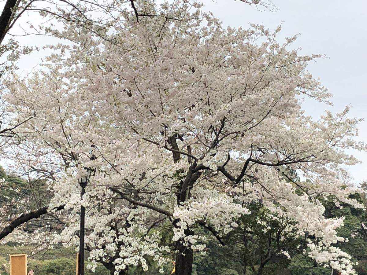 f:id:hideki-sansho:20190329163238j:plain
