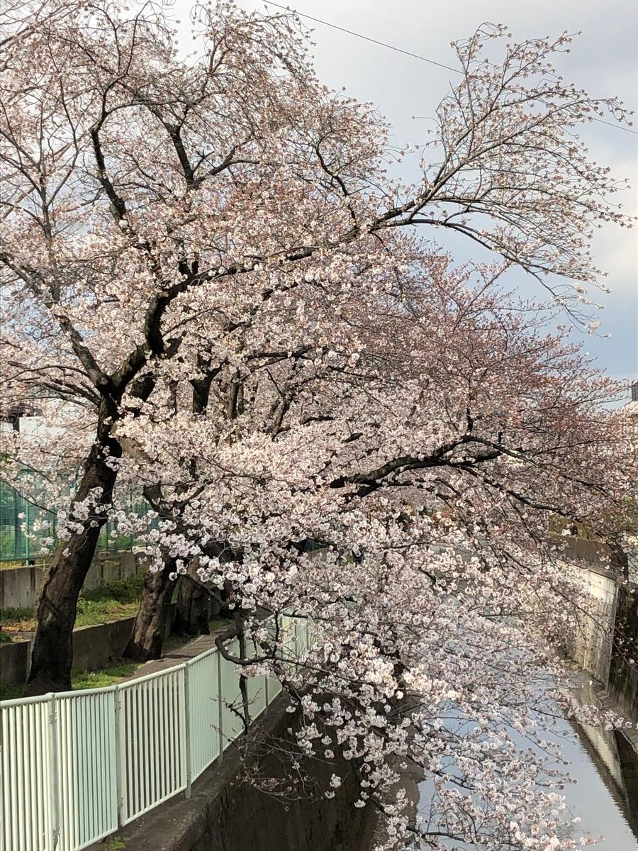 f:id:hideki-sansho:20190402203229j:plain