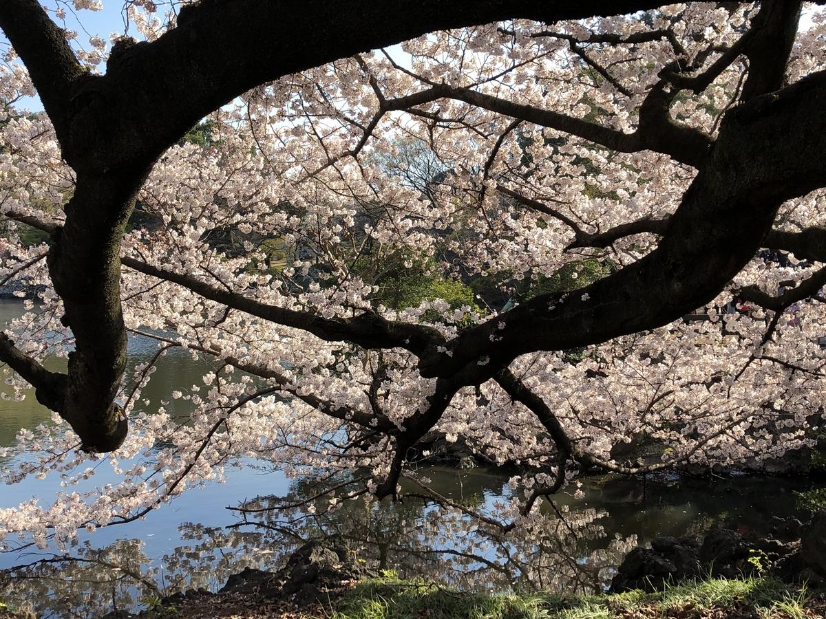 f:id:hideki-sansho:20190404195045j:plain