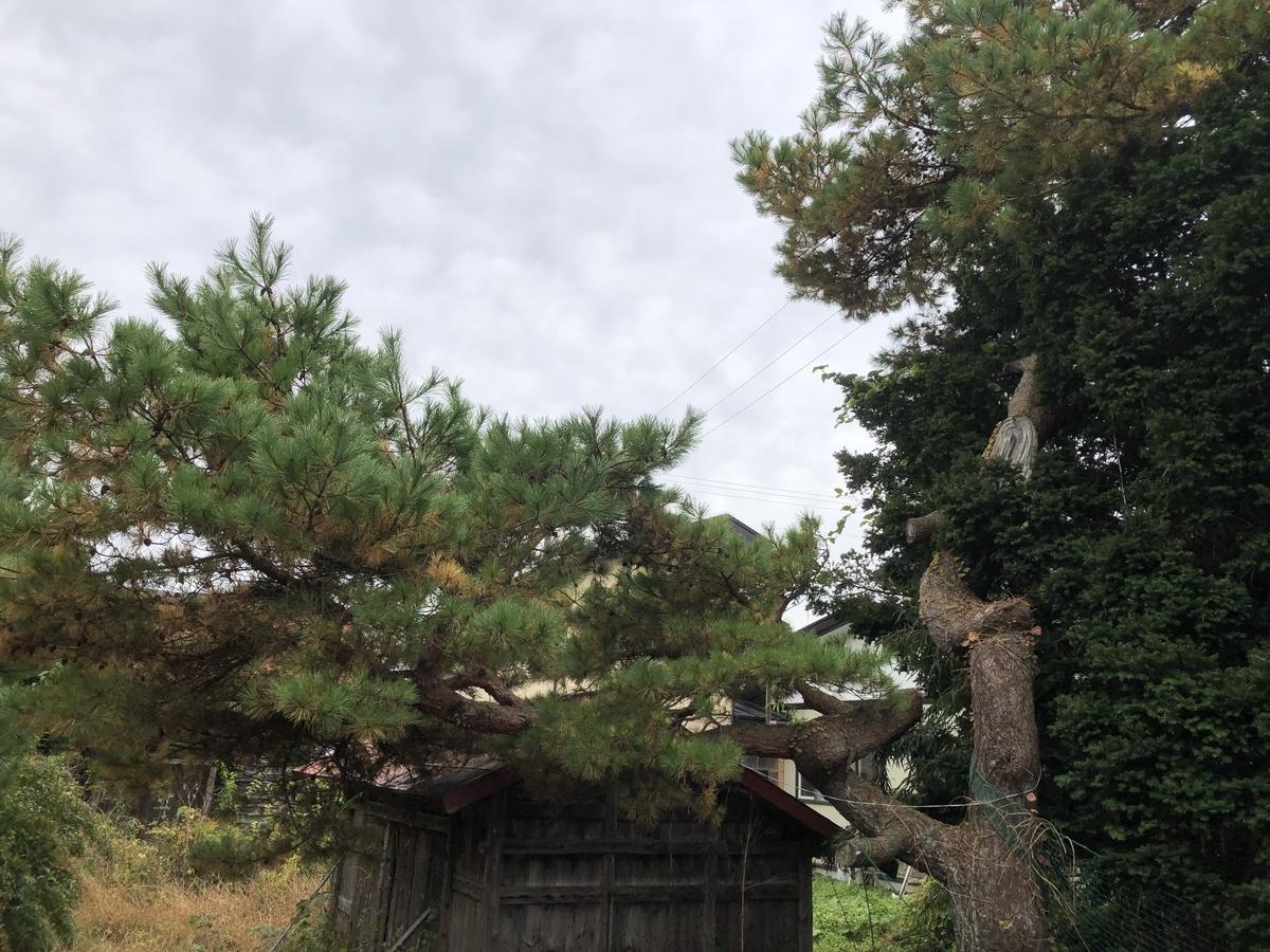 f:id:hideki-sansho:20191031164244j:plain