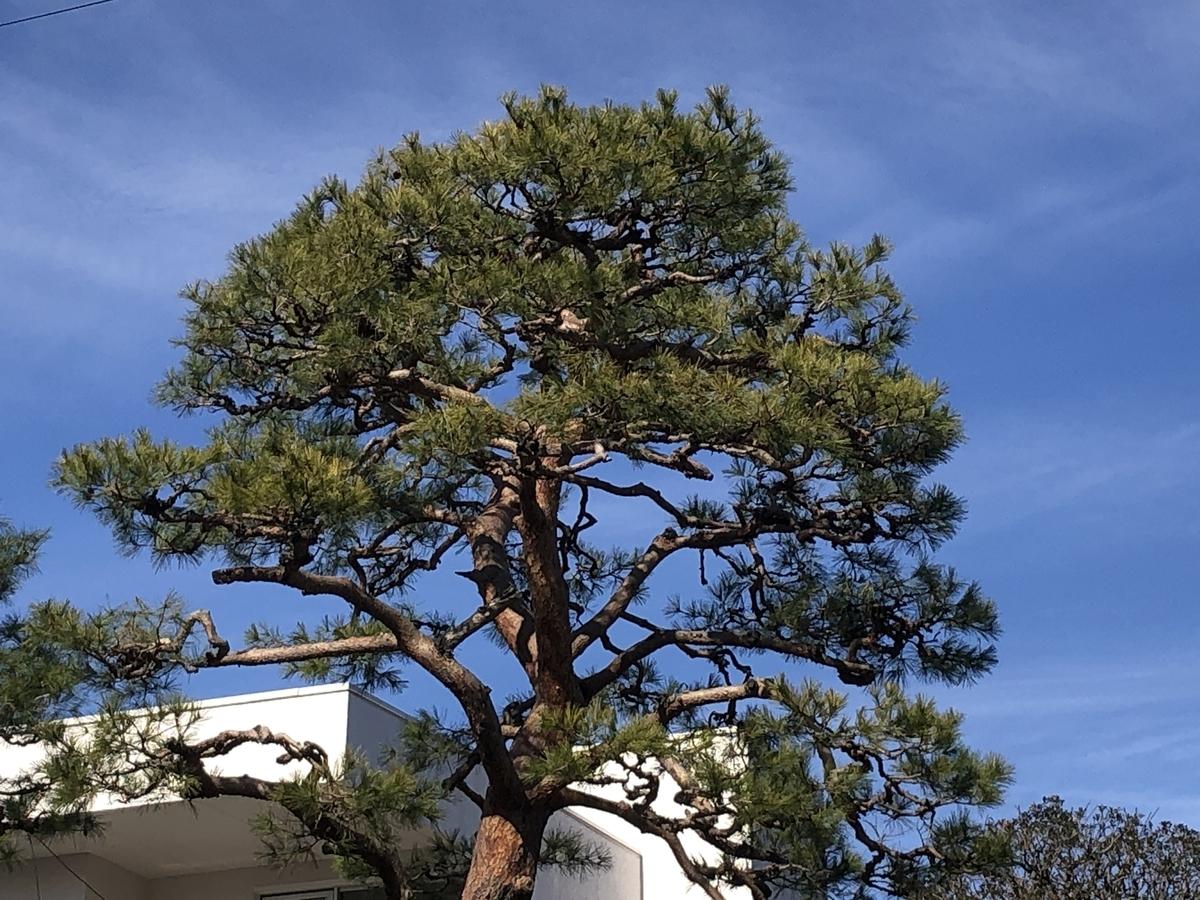 f:id:hideki-sansho:20200205162215j:plain