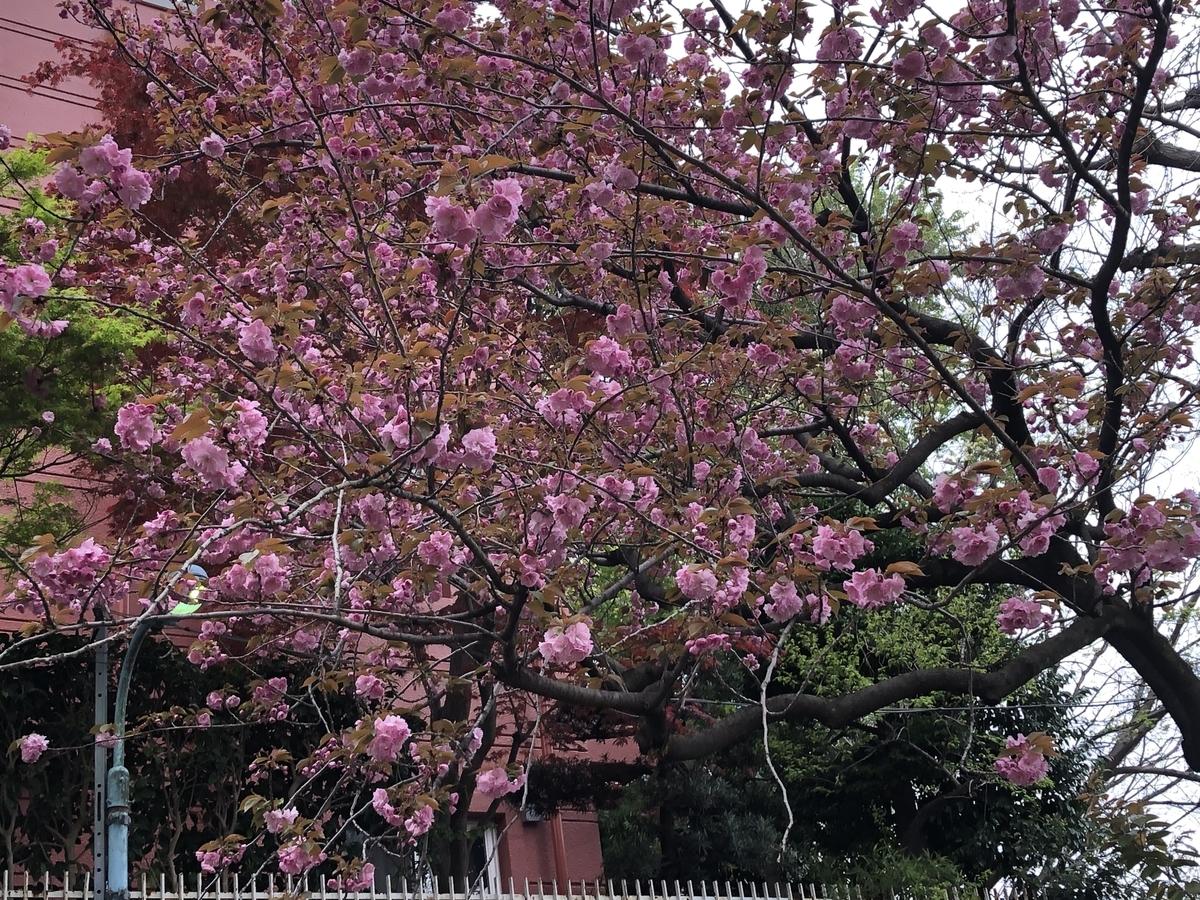 f:id:hideki-sansho:20200418195555j:plain