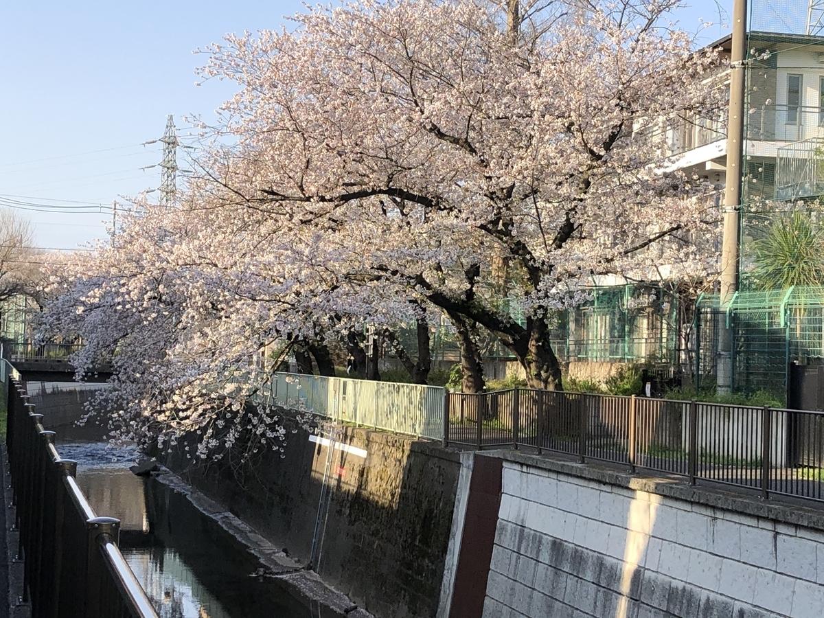 f:id:hideki-sansho:20200425154711j:plain