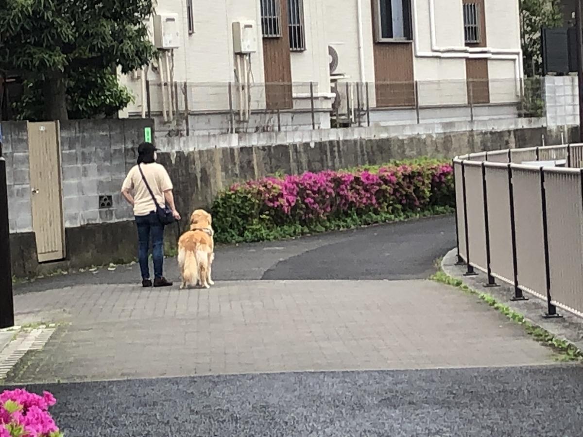 f:id:hideki-sansho:20200512114222j:plain