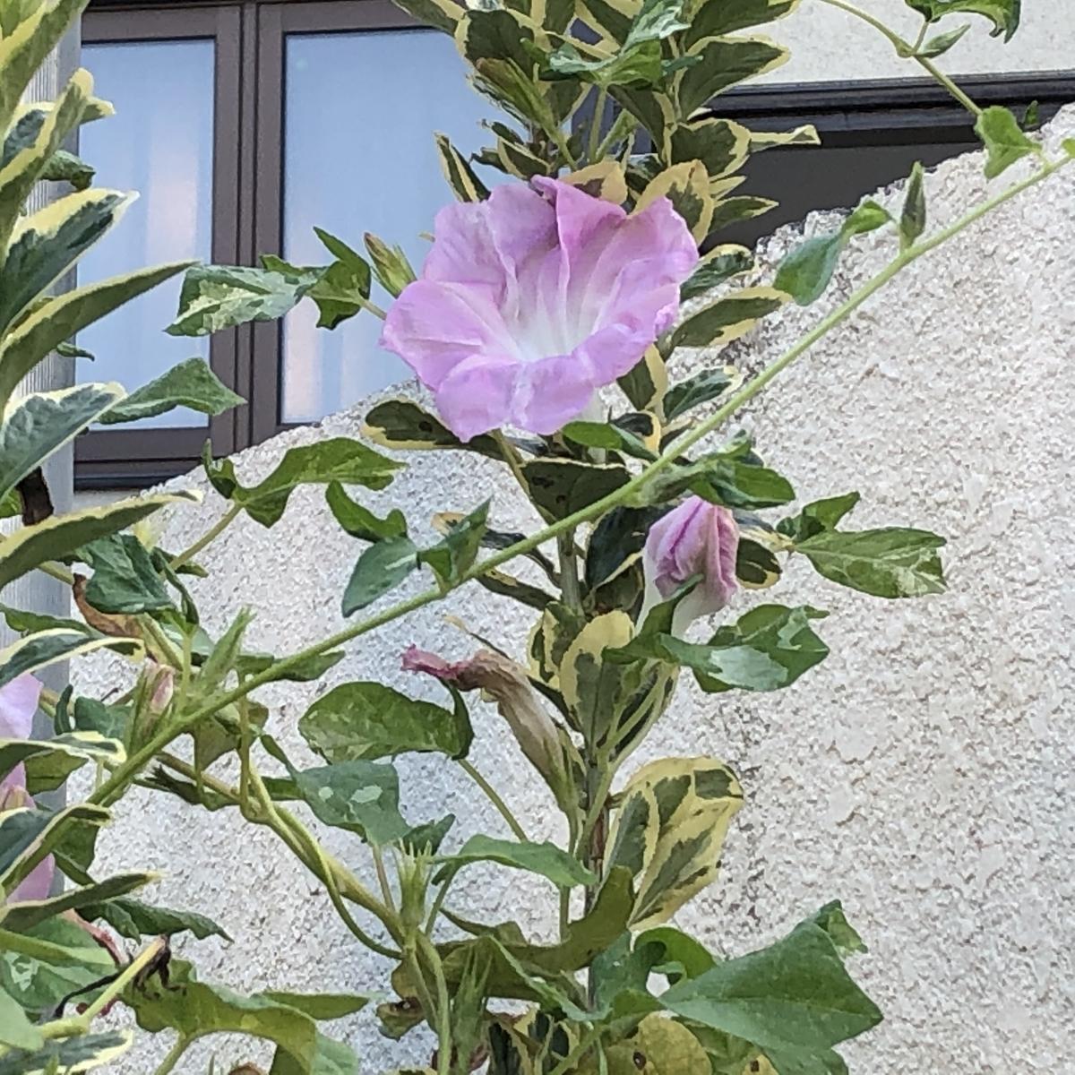 f:id:hideki-sansho:20201001213929j:plain
