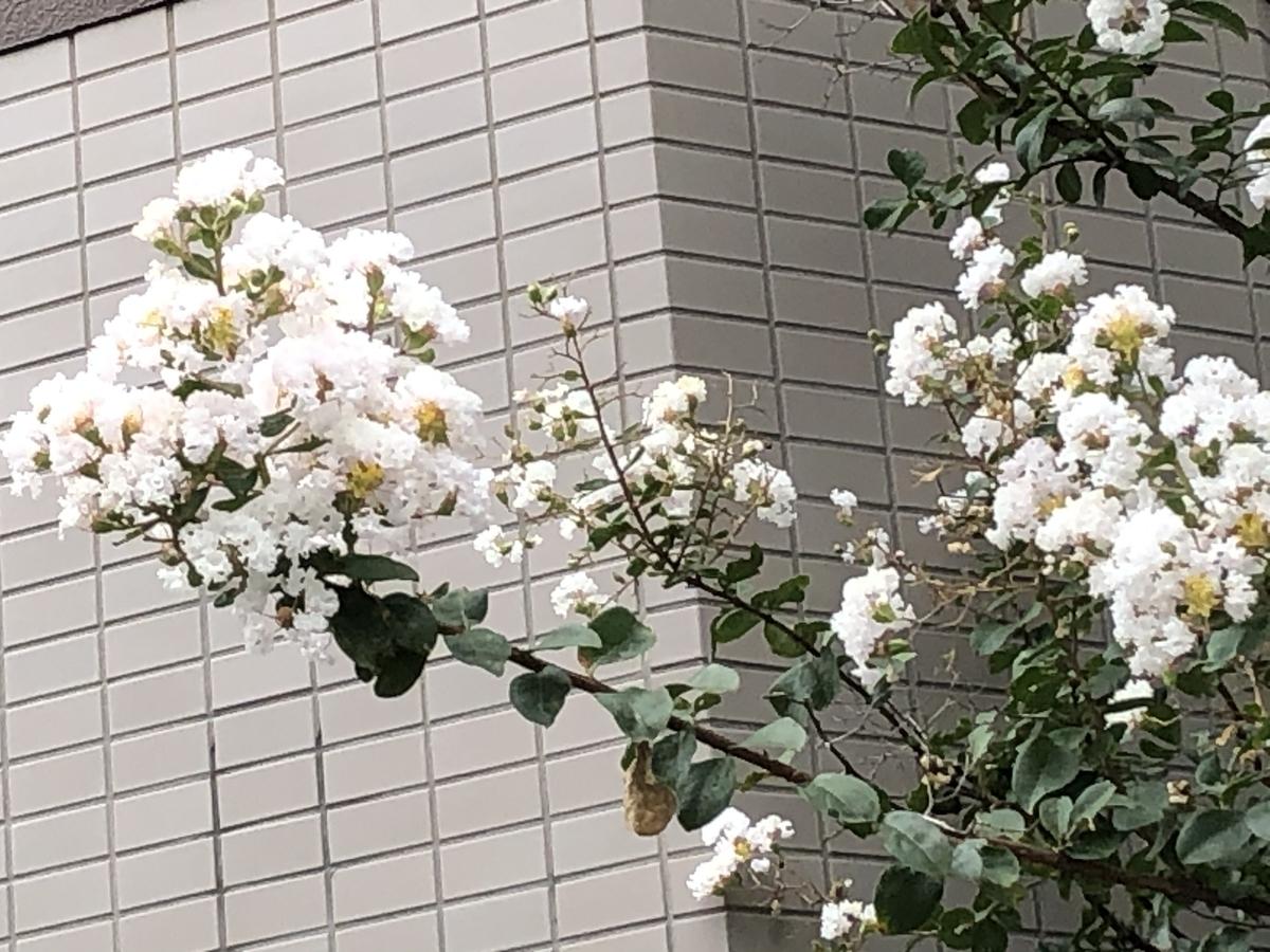 f:id:hideki-sansho:20201005052844j:plain