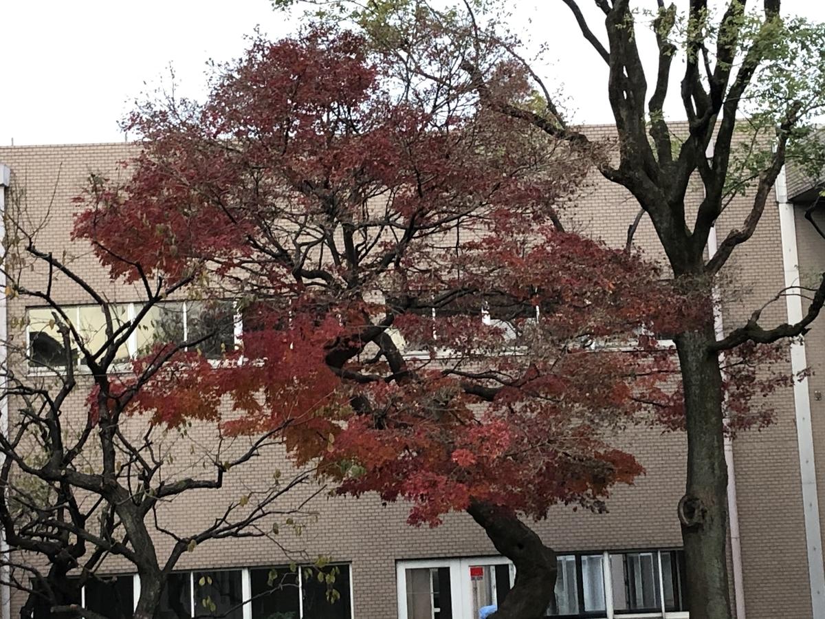 f:id:hideki-sansho:20201219162547j:plain