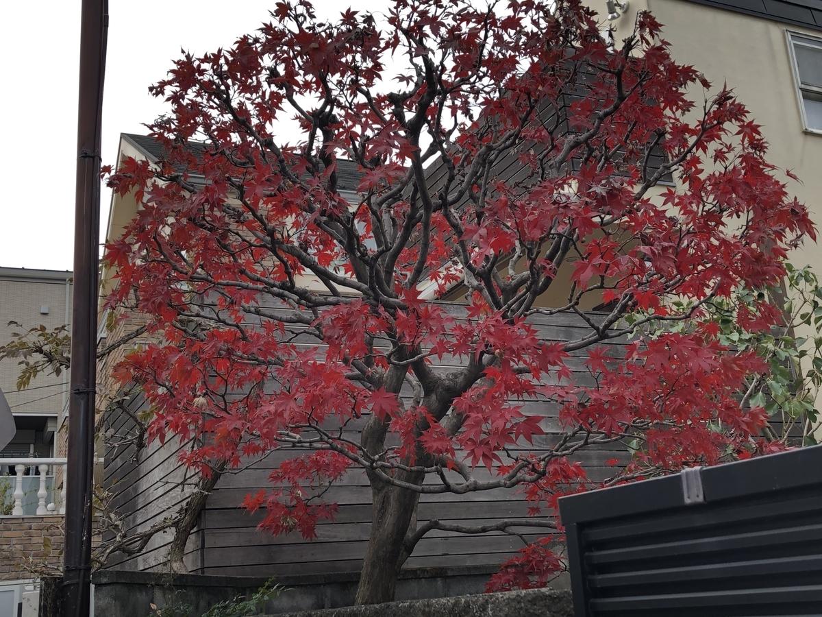 f:id:hideki-sansho:20201231101211j:plain