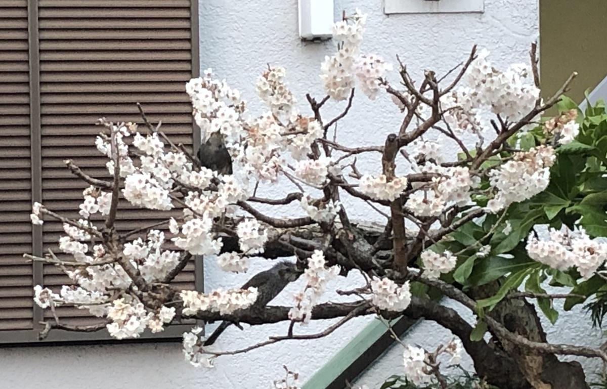 f:id:hideki-sansho:20210313145411j:plain