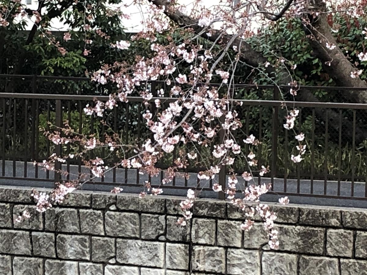 f:id:hideki-sansho:20210321120256j:plain